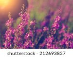 wild flowers in sunset   Shutterstock . vector #212693827