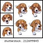 Set Of Adorable Beagle On Whit...