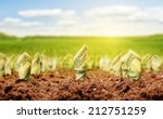american dollars grow from the... | Shutterstock . vector #212751259