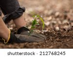 Planting A Seedling Tree