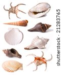 sea shell collection   Shutterstock . vector #21283765