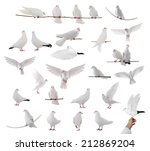 white dove isolated on a white ... | Shutterstock . vector #212869204