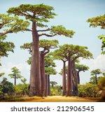 Baobab Trees And Rural Road At...