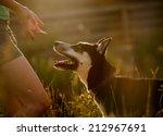 Stock photo dog obidient 212967691