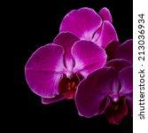 purple orchid flowers over... | Shutterstock . vector #213036934