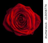 Small photo of beautiful red rose on black background