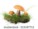 Three Boletus Mushroom In The...