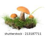 Three Boletus Mushroom In The...
