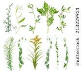 leaf   Shutterstock . vector #213229921
