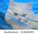 cat trapped | Shutterstock . vector #213269491
