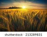 Beautiful Sunrise In A Wheat...