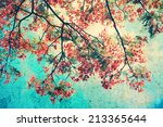 vintage orange peacock... | Shutterstock . vector #213365644