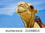 Detail Of The Camel Head On...