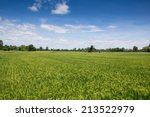 rice field green landscape... | Shutterstock . vector #213522979