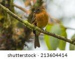 a cinnamon flycatcher  ...   Shutterstock . vector #213604414