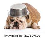 Hungry Dog   English Bulldog...
