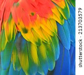 scarlet macaw feathers... | Shutterstock . vector #213703579