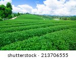 Постер, плакат: Tea plantation against blue