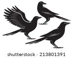 The Figure Shows A Bird Crow