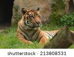 tiger. | Shutterstock . vector #213808531