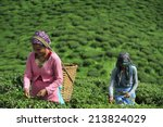 darjeeling  india     july. 3.... | Shutterstock . vector #213824029