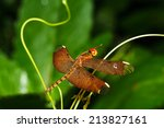 red dragonfly | Shutterstock . vector #213827161