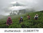 darjeeling  india     july. 5.... | Shutterstock . vector #213839779