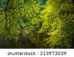 Trees Along The Lehigh River I...