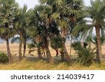 baidyapur  india   dec 01   an...   Shutterstock . vector #214039417