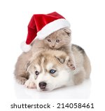 Stock photo scottish kitten and siberian husky puppy with santa hat isolated on white background 214058461
