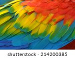 scarlet macaw feathers ... | Shutterstock . vector #214200385