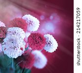 colorful autumn chrysanthemums... | Shutterstock . vector #214217059