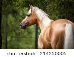 Palomino Horse With A White...