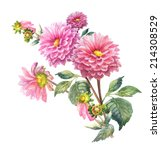 Pink Dahlias  Flowers  ....