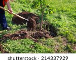 man plants a tree  hands with... | Shutterstock . vector #214337929