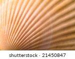 sea shell background | Shutterstock . vector #21450847