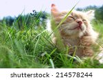 Stock photo relax kitten on green grass 214578244