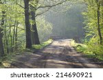 way through the spring forest | Shutterstock . vector #214690921