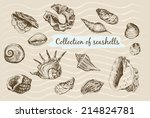 collection of seashells. hand... | Shutterstock .eps vector #214824781