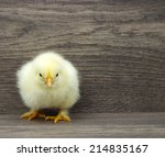 Stock photo small yellow chicken on a wooden background 214835167
