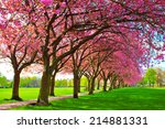 Green Lawn With Blossoming Pin...