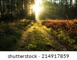rays of light in north poland | Shutterstock . vector #214917859