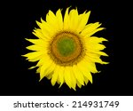 Bright Sunflower Flower  On A ...