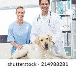 veterinarians with dog in...   Shutterstock . vector #214988281
