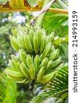 Bunches Of Green Bananas...