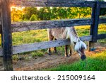 Shetland Pony Is Reaching...