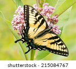 Eastern Tiger Swallowtail On...