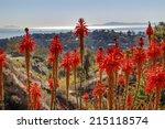 Orange Aloe Arborescens Cactus...