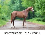 Chestnut Horse Standing On A...