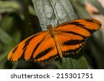 Small photo of Gulf Fritillary Butterfly